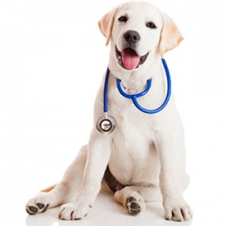Heartworm Testing and Prevention
